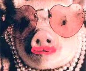 Image result for kiss a pig