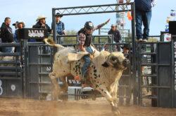 masik-tas-rodeo18_headley_10-2