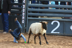 masik-tas-rodeo18_headley_13-2