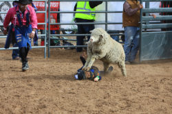 masik-tas-rodeo18_headley_17-2