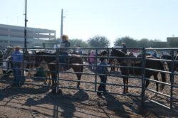 masiktas19_rodeo_1-2