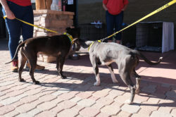 dog-adoption_norby-2-2