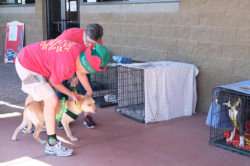 dog-adoption_norby-7-2